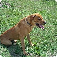 Adopt A Pet :: Barney - Windsor, MO