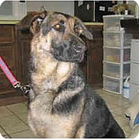 Adopt A Pet :: Shep - in Flagstaff - Scottsdale, AZ