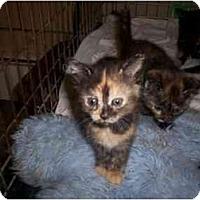 Adopt A Pet :: REESE - Warren, OH