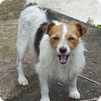 Adopt A Pet :: Rocky - Ormond Beach, FL