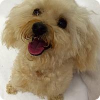 Adopt A Pet :: Gravy - Mission Viejo, CA