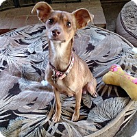 Adopt A Pet :: Millie - Simi Valley, CA