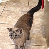 Adopt A Pet :: Hope sweetest girl - Sterling Hgts, MI