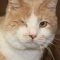 Adopt A Pet :: Albert - Savannah, MO