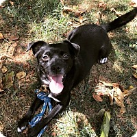 Adopt A Pet :: Dakota - North Olmsted, OH
