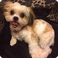 Adopt A Pet :: FRANCIE - Los Angeles, CA