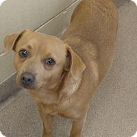 Adopt A Pet :: 1-13 - Triadelphia, WV