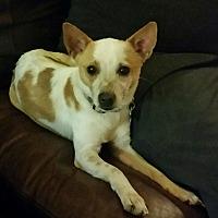 Adopt A Pet :: Charlie - Mexia, TX