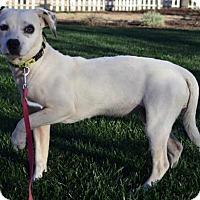 Adopt A Pet :: Porsche - Corona, CA