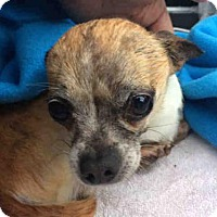 Adopt A Pet :: *DUDE - Sacramento, CA