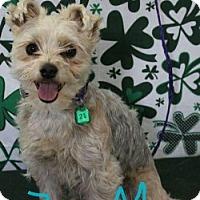 Adopt A Pet :: MARSHALL - Gustine, CA