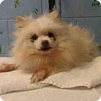 Adopt A Pet :: URGENT ON 3/30  San Bernardino - San Bernardino, CA
