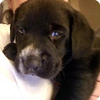 Adopt A Pet :: Hobbs - Gilbertsville, PA