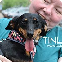 Adopt A Pet :: Tinley - Newport, KY
