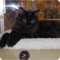 Adopt A Pet :: Hunter - Modesto, CA