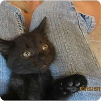 Adopt A Pet :: April - Sterling Hgts, MI