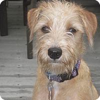 Adopt A Pet :: LIZZIE - W. Warwick, RI