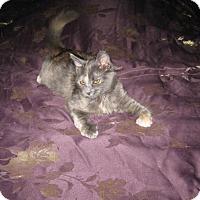 Adopt A Pet :: Lady Macbeth - Sacramento, CA