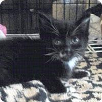 Adopt A Pet :: Orion - Davis, CA