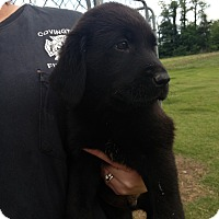 Adopt A Pet :: Mason - Stamford, CT