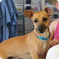 Adopt A Pet :: Jade - Homewood, AL