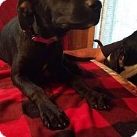 Adopt A Pet :: Hannah - Charlestown, RI