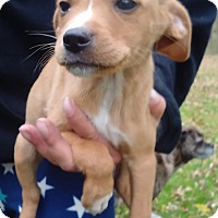 Adopt A Pet :: Mike - Kendall, NY