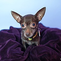 Adopt A Pet :: Yogi - Studio City, CA