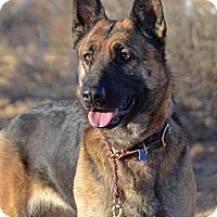 Adopt A Pet :: Katie - Altadena, CA
