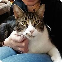 Adopt A Pet :: Zorro - Georgetown, DE