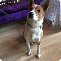 Adopt A Pet :: Orlando - Milwaukee, WI