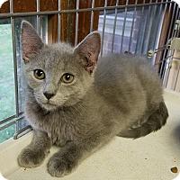 Adopt A Pet :: Winona - Jeannette, PA
