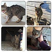 Adopt A Pet :: Charlie - Shavertown, PA