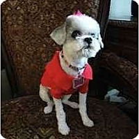 Adopt A Pet :: Sundae - spring valley, CA