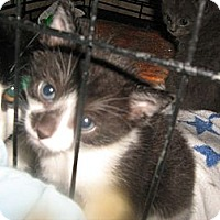 Adopt A Pet :: Gus - Westfield, MA