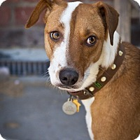 Adopt A Pet :: Caleb - Orange, CA