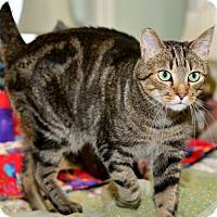 Adopt A Pet :: Frederich - Davis, CA