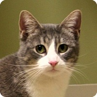 Adopt A Pet :: Smokie - Hastings, NE
