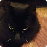 Adopt A Pet :: Deuce - Wilmore, KY
