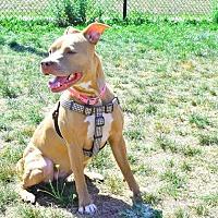Adopt A Pet :: Jada - Worcester, MA