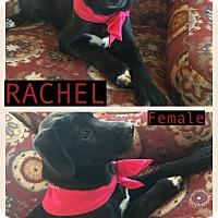 Adopt A Pet :: Rachel meet me 4/21 - Manchester, CT