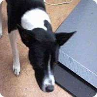 Adopt A Pet :: A714173 - Sacramento, CA