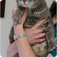 Adopt A Pet :: Mickey sweetest - Sacramento, CA
