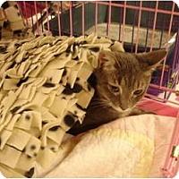 Adopt A Pet :: Snuggles - Chesapeake, VA