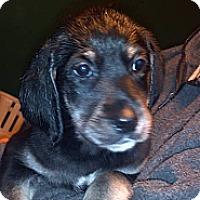Adopt A Pet :: Zack - Morgantown, WV