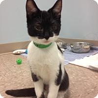 Adopt A Pet :: Remy - Byron Center, MI