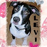 Adopt A Pet :: LEVI - Higley, AZ