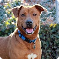 Adopt A Pet :: Bobbi - Port Washington, NY