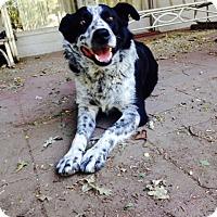 Adopt A Pet :: Spottie - Woodland, CA