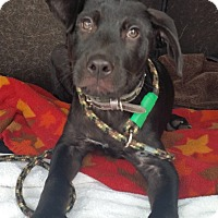 Adopt A Pet :: Rocky - Coppell, TX